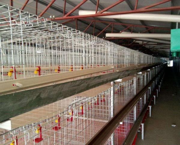 家禽养殖笼具